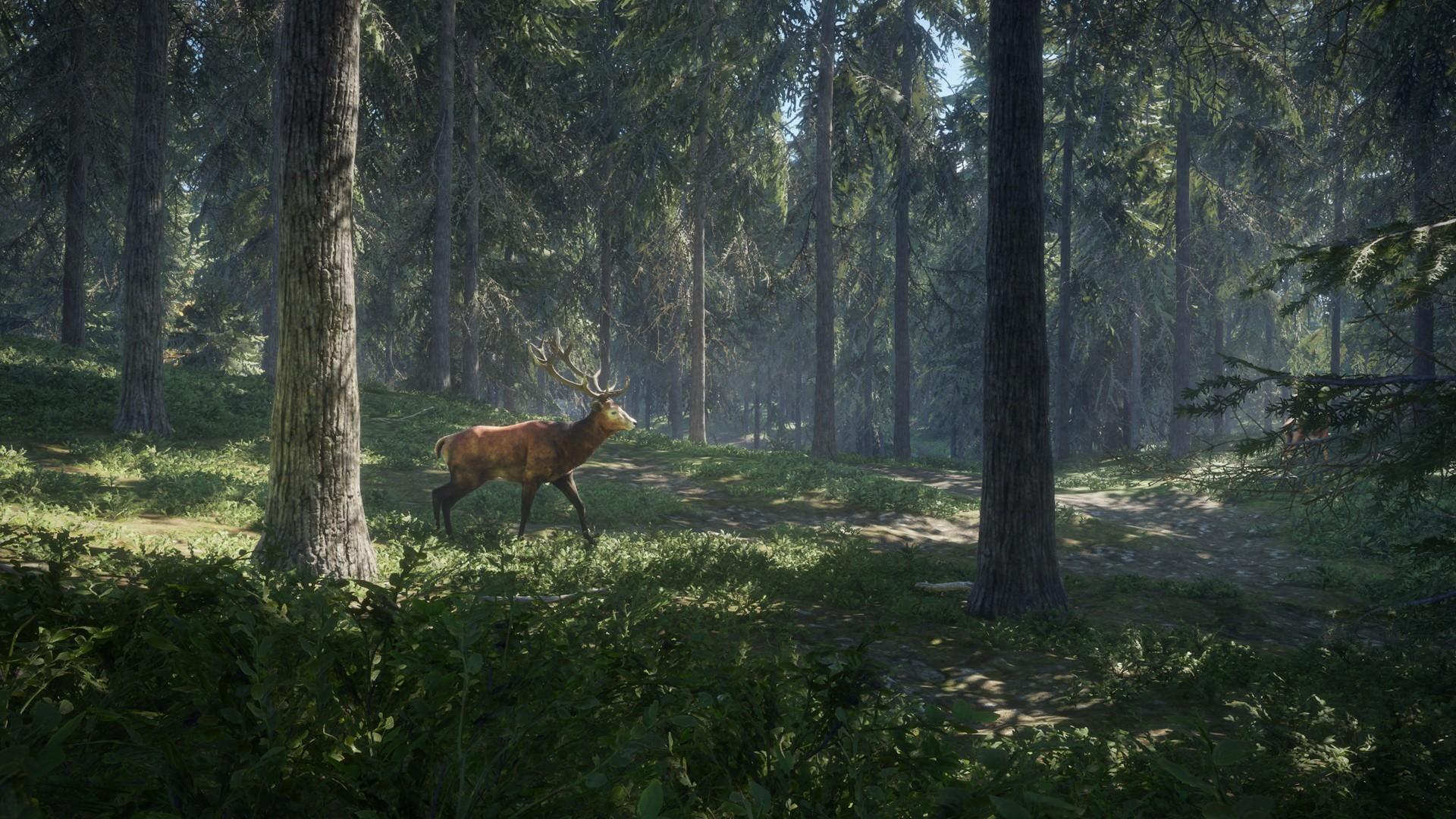 سی دی کی اریجینال استیم بازی theHunter: Call Of The Wild